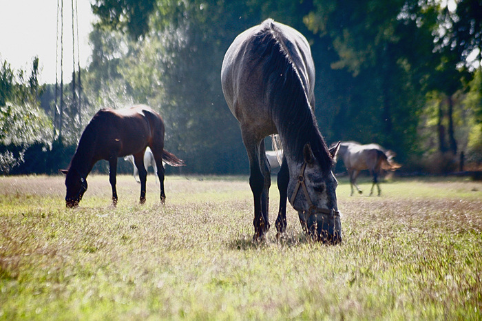 photoblog image Peacefully horses